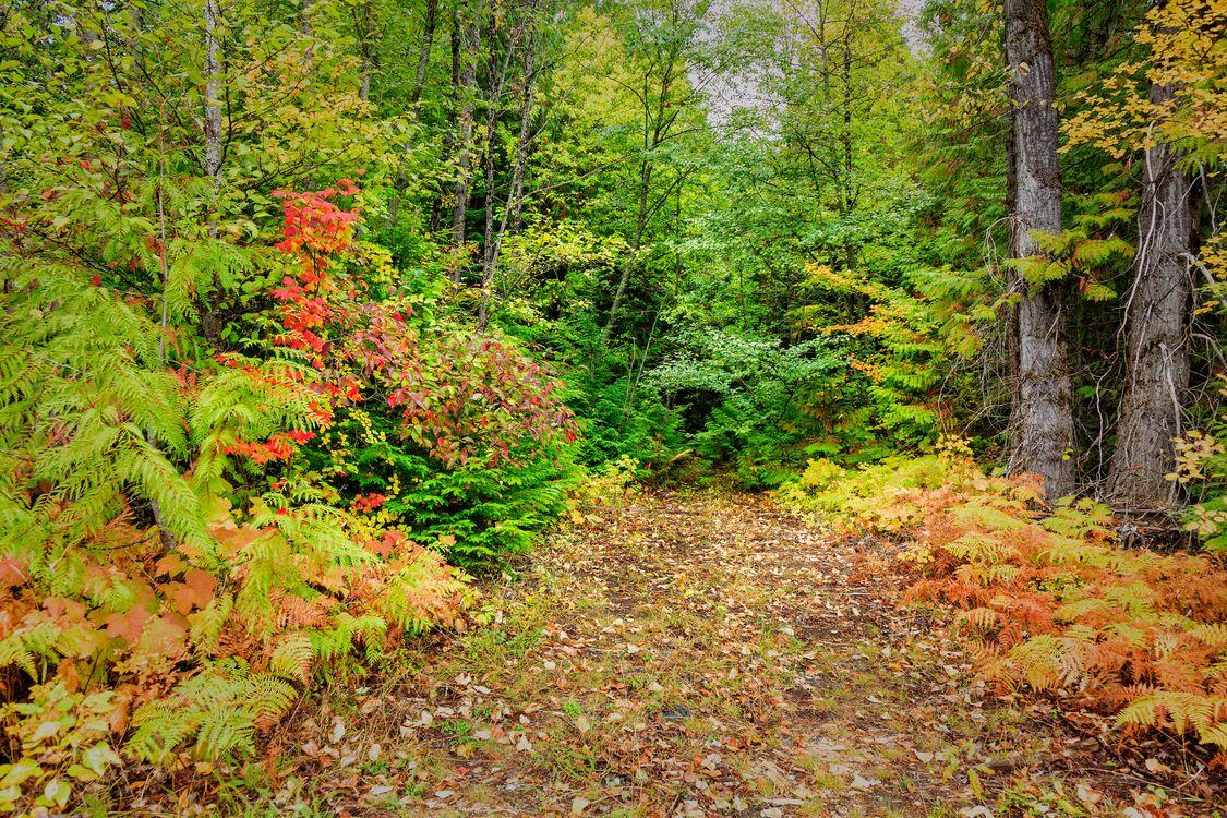 Фото бесплатно лес, деревья, осень, природа, природа - скачать на рабочий стол