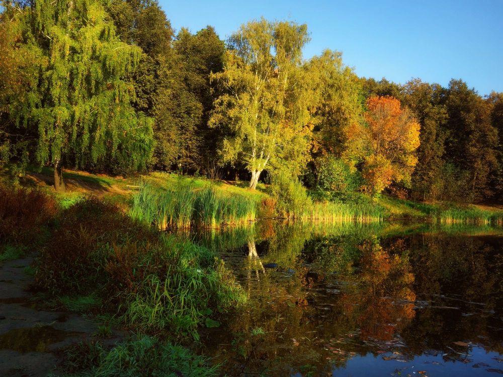 Фото бесплатно осенние цветы, деревья, осенние листья - на рабочий стол