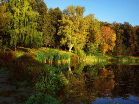 Photo free pond, autumn colors, landscape
