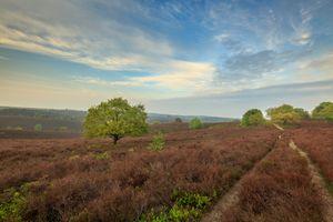 Бесплатные фото поле,деревья,небо,сельская дорога,сельская местность,природа,пейзаж