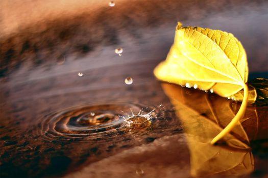 Фото бесплатно осень, капля, падение