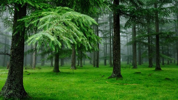 Photo free forest, green, nature