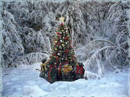 Фото бесплатно Merry Christmas, новогодний лес, снег, новогодняя ёлка, подарки, зима, зимний лес, с новым годом, пейзаж