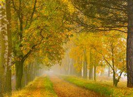Бесплатные фото осень,деревья,парк,лес,туман,дорога,канава
