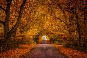 Заставки природа, дорога, осенние листья