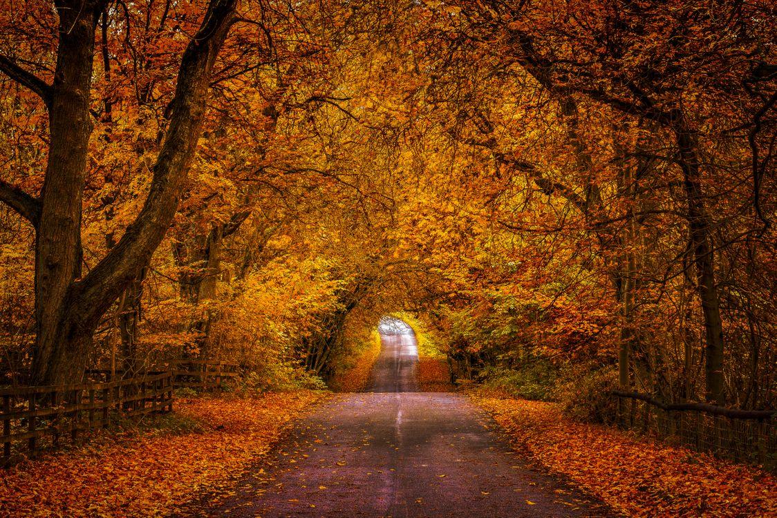 Фото бесплатно природа, дорога, осенние листья - на рабочий стол