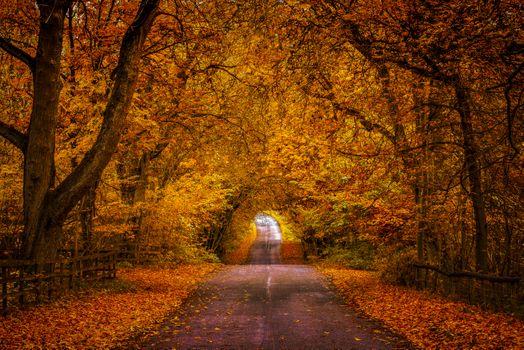Photo free nature, road, autumn leaves