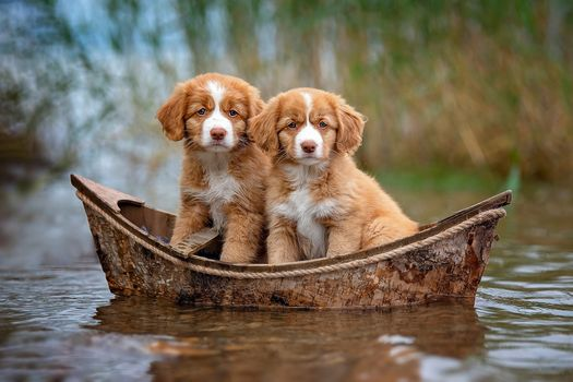 Two puppies in a boat - free photo