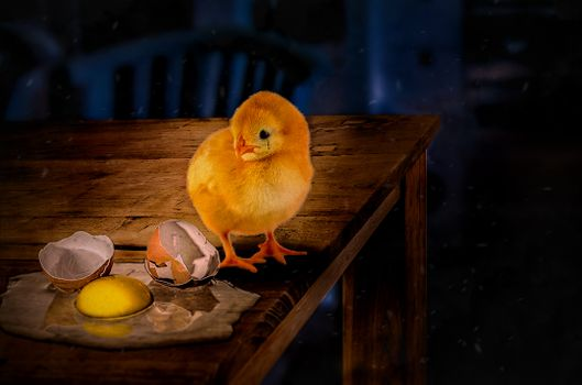 Photo free chick, broken egg, table