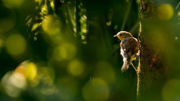 Фото бесплатно Sunbeam, освещение, фауна
