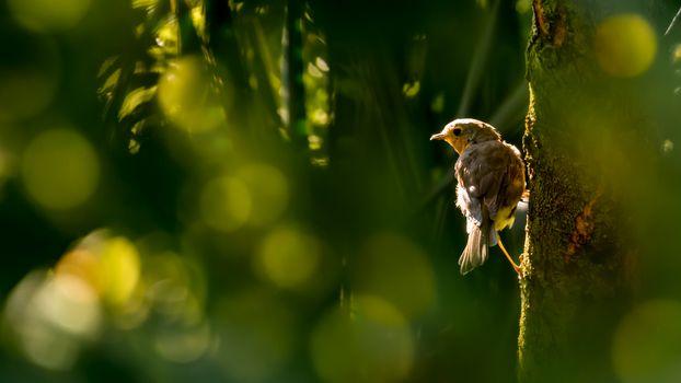 Заставки Sunbeam, освещение, фауна