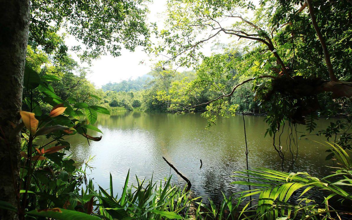 Обои дерево, вода, природа картинки на телефон