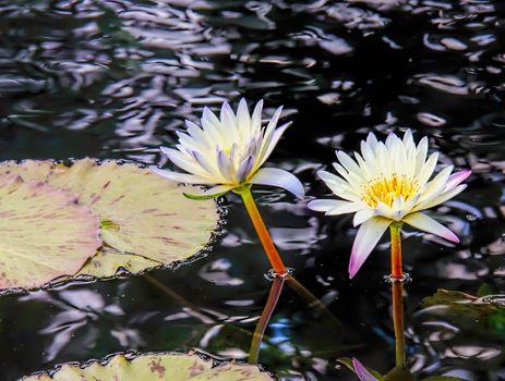 Летние речные цветы