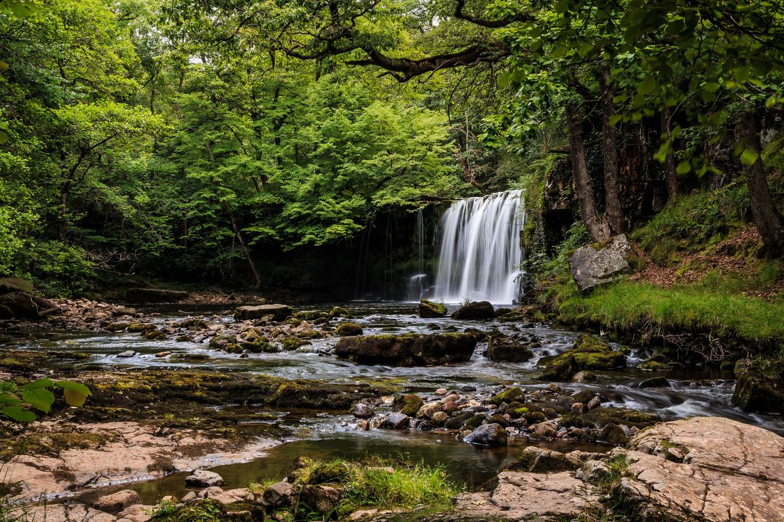 Фото бесплатно лес, деревья, водопад, скалы, природа, пейзаж, природа