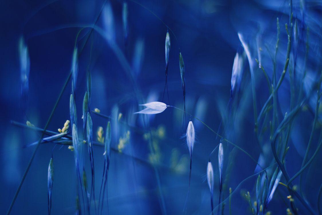 Фото бесплатно растения, разнообразие, природа - на рабочий стол