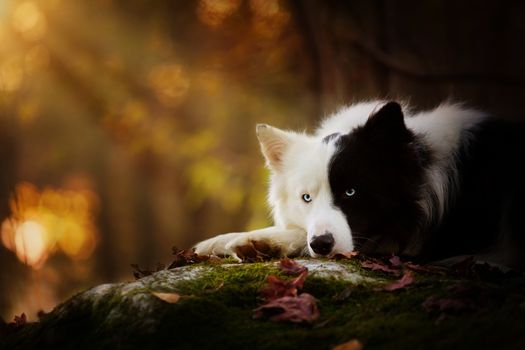 Yin-yang dog in thought about the meaning of life · free photo