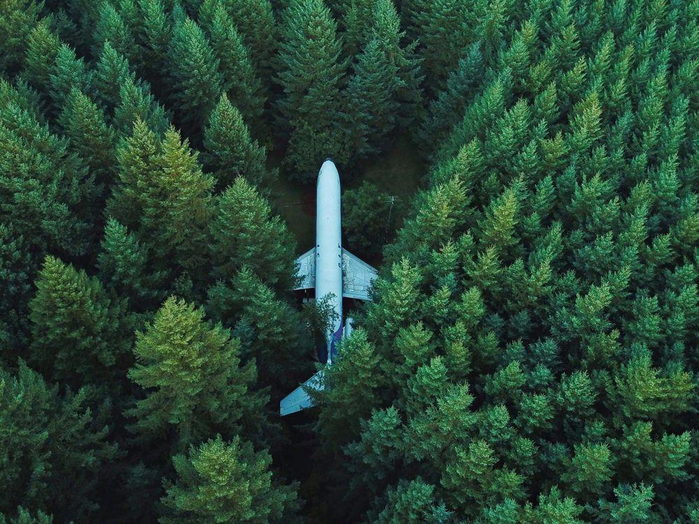 Обои Airplane, green, forest на телефон   картинки ситуации