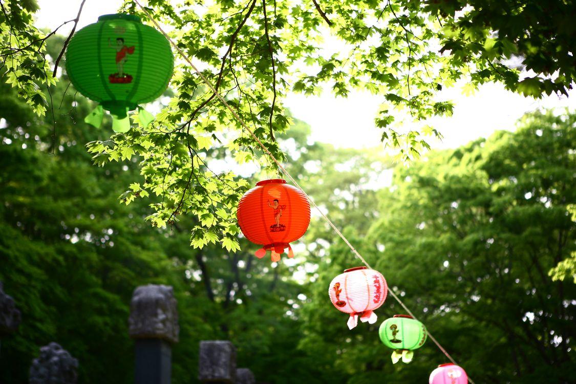 Фото бесплатно буддизм, лист, храм, фонарь, разное
