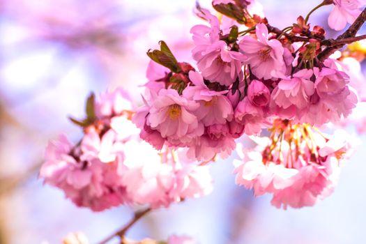 Фото бесплатно дерево, филиал, цвести