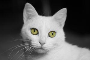 Фото бесплатно кот, кошка, животное, взгляд, морда