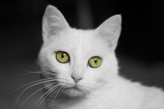 Фото бесплатно кот, кошка, животное