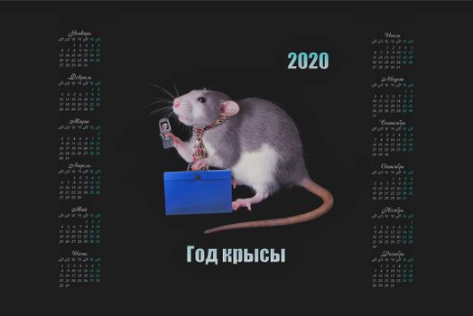 Calendar for the year 2020 a rat with a mobile phone · free photo