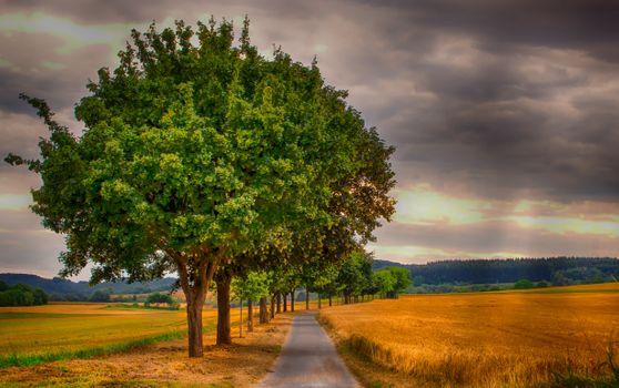 Бесплатные фото поле,дорога,колосья,деревья,природа,пейзаж