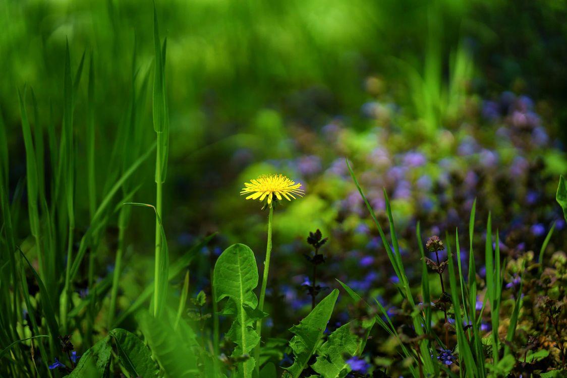 Фото бесплатно поле, трава, цветок - на рабочий стол