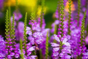 Фото бесплатно цветочный сад, цветок, сад