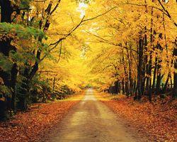 Заставки лес,деревья,дорога,осень
