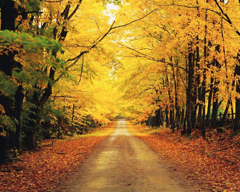 Фото бесплатно лес, деревья, дорога, осень, пейзажи