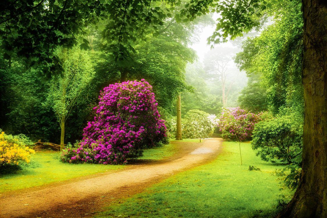 Фото бесплатно Норфолк, Великобритания, парк, лес деревья, дорога, туман, кустарник, цветы, на открытом воздухе, Рододендрон, пейзаж, пейзажи - скачать на рабочий стол