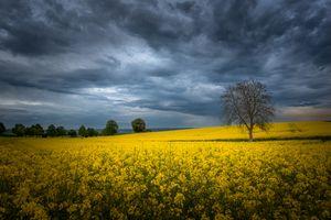 Фото бесплатно природа, цветы, дерево
