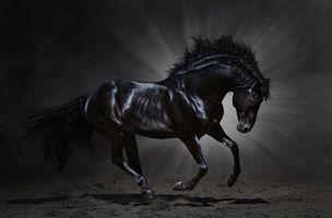 Фото бесплатно лошади, лошадь, грива