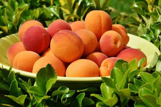 Фото бесплатно абрикос, тарелка, листья