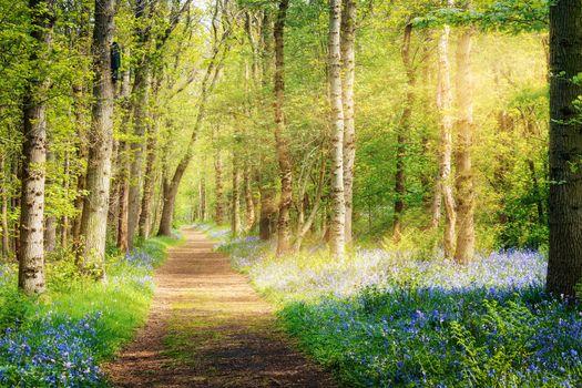 Photo free sunshine, trees, forest