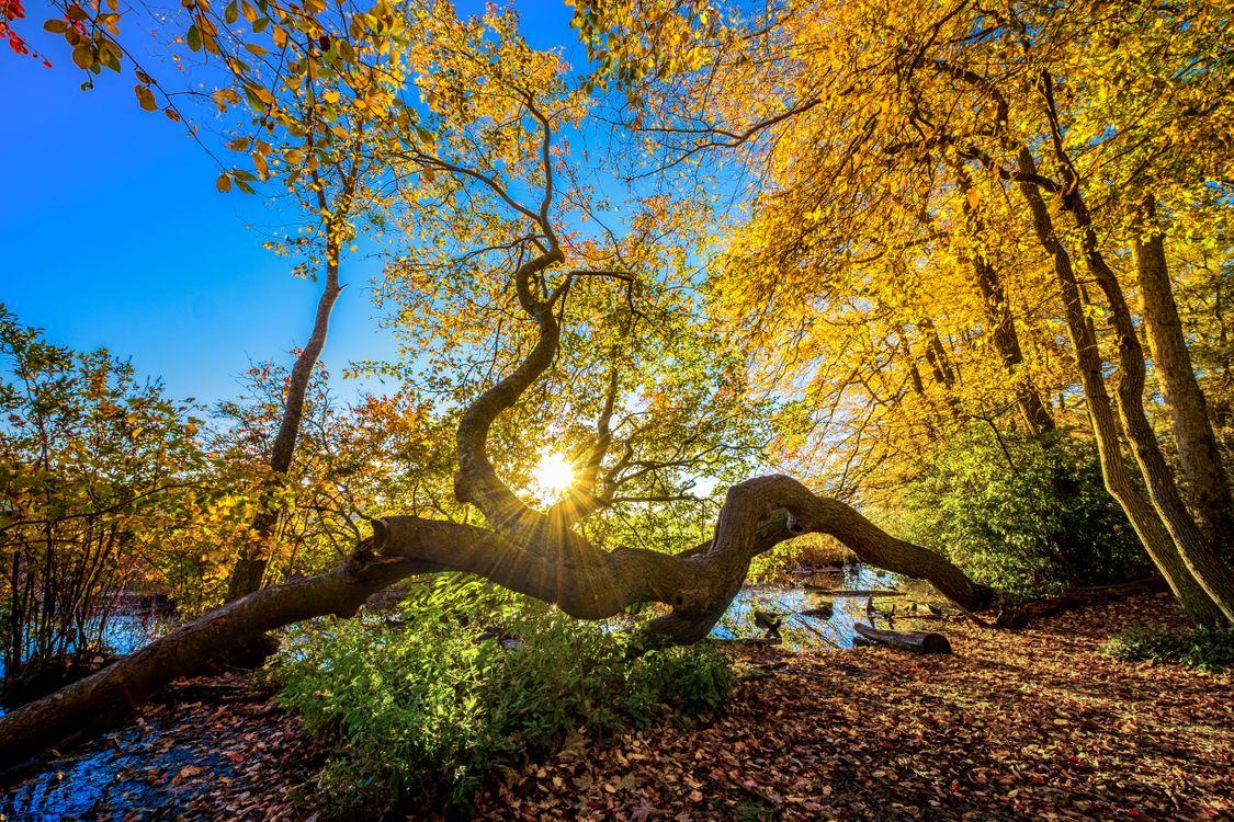 Фото бесплатно природа, пейзаж, цвета осени - на рабочий стол
