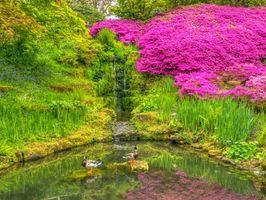 Бесплатные фото Уэйкхерст Плейс,Англия,парк,пруд,цветы,азалия,водопад