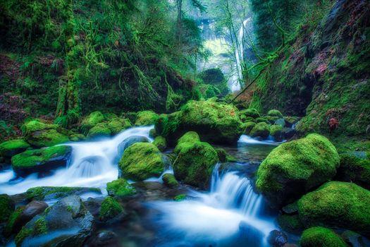 Фото бесплатно Elowah Falls, Oregon, мшистый лес