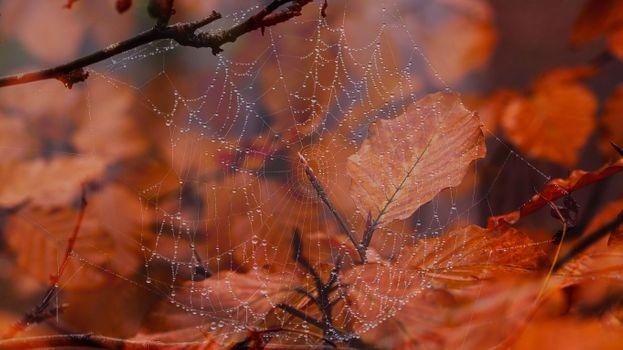 Бесплатные фото осень,осенние листья,ветки,паутина,капли,природа,макро