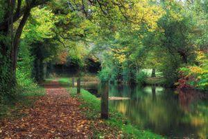 Бесплатные фото осень,парк,лес,канал,деревья,тропинка,краски осени