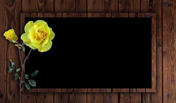 Photo free frame, rose, flower