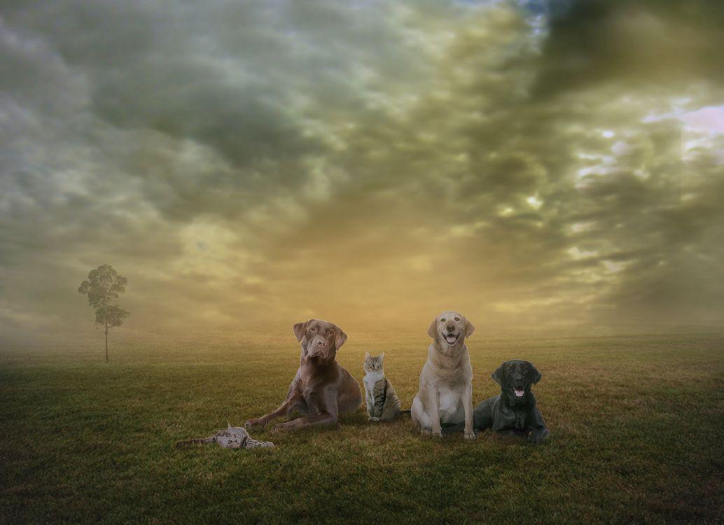 Фото бесплатно туман, поле, собаки, кошки, дерево, закат, art, рендеринг