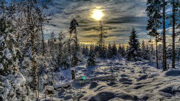Бесплатные фото закат,зима,сумерки,лес,снег,деревья,природа