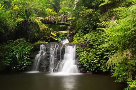 Photo free Australia, Lamington National Park, Queensland