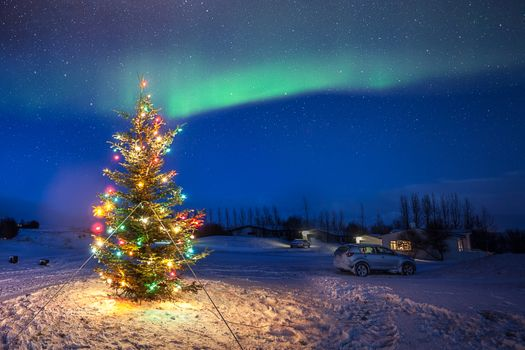 Photo free Iceland, christmas, Christmas tree