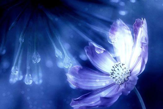Космея - капли дождя и цветы · бесплатное фото