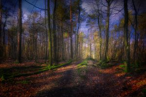 Фото бесплатно осень, лес, деревья природа