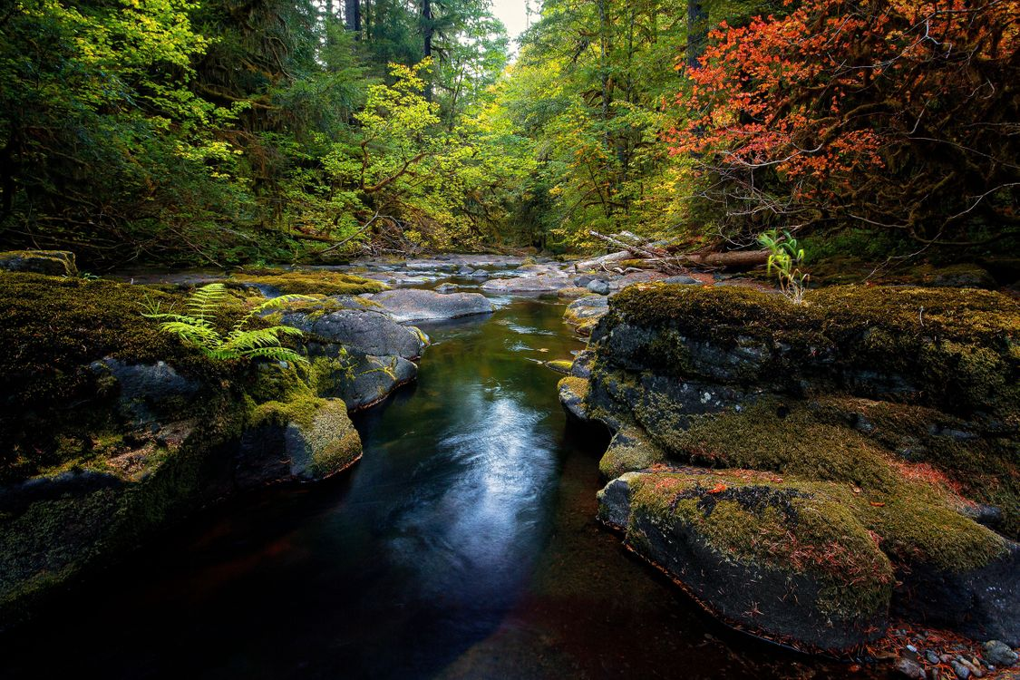 Обои пейзаж, лес, мох картинки на телефон