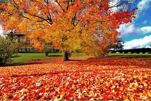 Заставки осенние краски, оранжевое дерево, краски осени, парк, осень, осенние листья, деревья